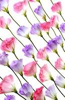 Flowers arranged in a row