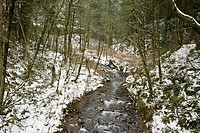 Stream amid snow-covered forest