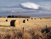 Round bales in field near Cochrane, Alberta