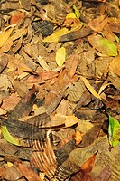 Close-up dry leaves