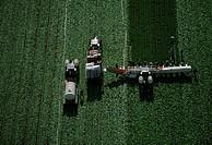 Aerial, harvesting head lettuce