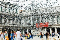 Pigeons flying in front of a building, St  Mark´s Square, Venice, Italy