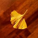 Ginkgoblatt, Ginkgo biloba, water-drops, dried plant, salvation-plant salvation-herbs medicine-plant nature-remedies leaf, Ginkgo, dewdrop, moisture, ...