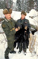 Biologists, with, Black, Bear, cubs, La, Mauricie, national, park, Quebec, Canada, Ursus, americanus