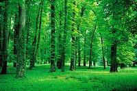 Forest In Summer,Dijon,France