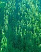 Mt Rainier National Park,Washington,USA
