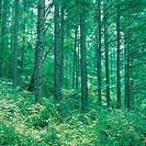 Forest in Spring,Gyeonggi,Korea
