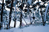 Snow-covered Trees,Jeonbuk,Korea