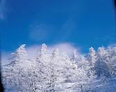 Forest In Winter,Korea