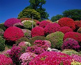 Tsurumine park, azalea, Okaya, Nagano, Japan