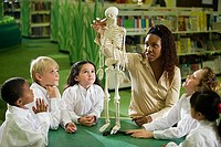 Teacher showing a model skeleton to students in the library