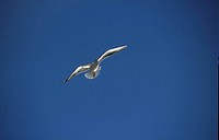 Bird with open wings in the blue sky