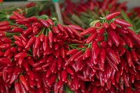 Close up of bunches of red chillies