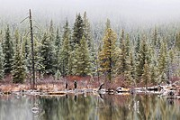 Trout Ponds, Kananaskis Country, Alberta, Canada