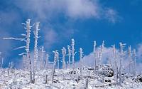 Mt  Jirisan National Park,Korea