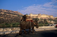 India, Rajsatan, Jaipur area at Amber Fort. Elephant and mahoot