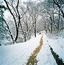 Winter Snow,Korea