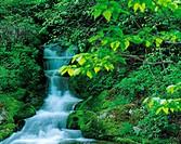 Forest stream,Gangwon,Korea