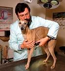Veterinary surgeon examining dog on table