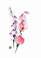 Sweet peas, ink brush painting, white background, cut out