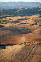 Aerial of the Valensole Plateau at fall .Alpes de Haute-Provence (04). Provence. France