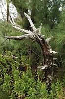 Bermuda. Overseas Territory of the United Kingdom - Main Island. Spittal Pond Nature Reserve. Woodland