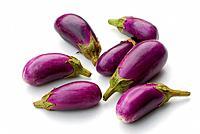 Eggplants, Solanum melongena