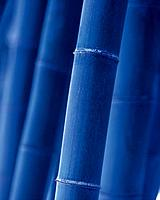 Bamboo grove, close up