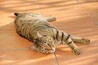 domestic cat _ lying restrictions: Tierratgeber_Bücher / animal guidebooks