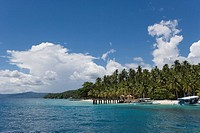 Palm trees on beach overlooking sea
