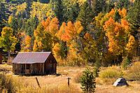An old cabin and aspens trees in fall color in Hope Valley California