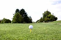 Golf Course,Auckland,North Island,New Zealand