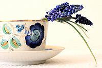 Half cut view a couple stems of grape hyacinth curve over the rim of a white procelain cup with blue floral motif grape hyacinth droops in a blue porc...