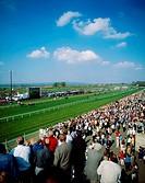 Flat Racing, The Maze, Down Royal, Co Down, Ireland