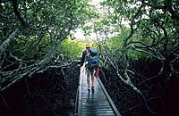 Man walking along the board walk at Missionary Bay, Hinchinbrook Island, Great Barrier Reef, Australia