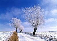 Trees and fields in winter