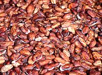 natural cocoa cacao beans grains seeds drying