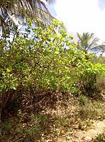 natural ground vegetation on northeast