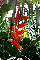 a decorative exotic flower in a garden