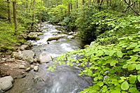 Roaring Fork Creek, Motor Nature Trail, Great Smoky Mountains National Park, TN, USA
