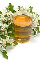 medicinal tea made of Common hawthorn, fresh parts and cup of tea, herb, medicinal plant, Biancospino comune, te,