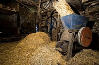 Straw surrounding apple shredding machine in barn, Brimblecombes Devon Farmhouse Cider Press,Farrants Farm,Dartmoor National Park,Dunsford,Devon,UK