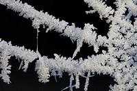 Spider´s web, frozen