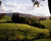 Farmscape, Near Clogheen, Co Waterford, Ireland