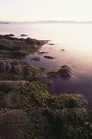 Rocky shoreline of Nanoose Bay, Vancouver Island, BC