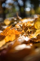 Leaves, close_up