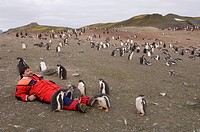 Antarctica, South Shetlands Islands, Aitcho Island, Tourist at Gentoo Penguin colony. MR.