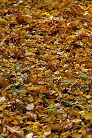 High angle view of fallen leaves