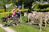 Germany, Bavaria, Oberland, Two women with mountain bikes feeding donkeys