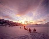 Siberian Huskies _ pulling sledge
